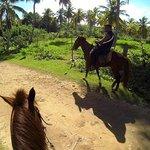 Rudy' Horses