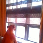 Minnie Pearl thoroughly enjoyed watching the snow fall upon the city from her warm & comfy sofa!