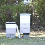 Bee hives to harvest their own honey