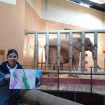 Elephant paints us a picture
