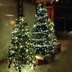 Lobby Xmas Trees