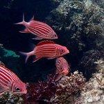 Kiwengwa reef