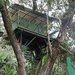 Tree House !!!