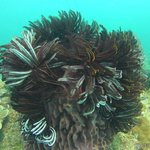 Scuba diving and Snorkeling at TARP