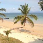 Un palmier de reve