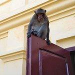 Macaco fuori dalla Pagoda