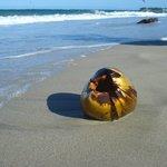 Kokosnöt på stranden