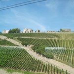 Weinbaugebiet Würzburger Stein