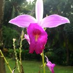 One of the beautiful orchids at the villa