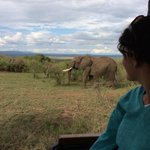 Our first day on safari
