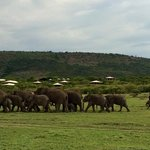 A huge family of elephants right by the camp