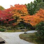 今回の京都旅行で一番きれいに撮れたかも