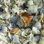 Some beach shells