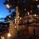 Camelback Inn-illuminated Cactii