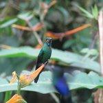 Hummingbird at the hummingbird gallery