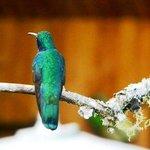 Hummingbird at Hotel Savegre
