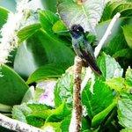Hummingbird in San Gerardo reserve