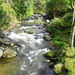 Savegre River by Savegre Hotel