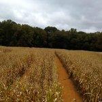 Rural Hill 2013 Amazing Maize Maze