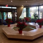 The staff put out these lovely poinsettias for the holidays around the fountain in the lobby