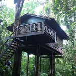 Forest Treehouse, with a queen size bed and bunks, perfect for our family of 4.