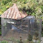 Tucan cage