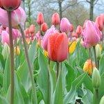 2B: Bed & Breakfast - close to Keukenhof Tulips