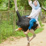 Катание на страусах