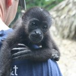Me and Aldo, a baby Howler monkey.
