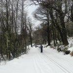 Esqui em meio ao bosque