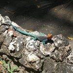 Geckos leben auch hier