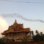 The Temple and Bats