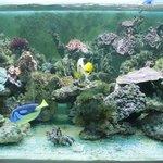 Aperçu d'un aquarium