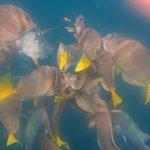 Snorkeling at Pelican Rock