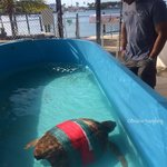 A current patient dealing with an impaction from garage in our ocean. Here he can rest and recov