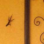 Bug-catching lizard