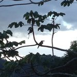 toucan in the tree right over our treehouse