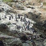 Photo de The Cliffs Preserve at Patagonia, Chile