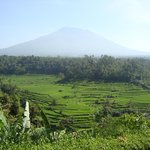 vue du volcan Batur et des rizières de la terrasse du restaurant