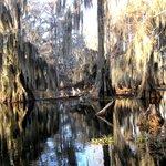 Real deep swamp
