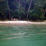 Isla Tortuga snorkeling from Curu