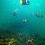 Snorkeling at Isla Tortuga