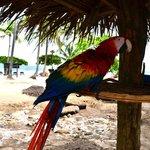 Isla Tortuga's Paco