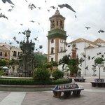 Птицы  на  Plaza Alta