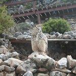 Jardin de Las Aguilas
