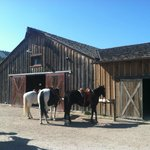 Barn for Riding; Available Every Day