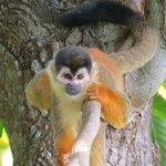 Squirrel Monkey on the grounds
