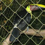 Toucan (one of many)