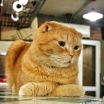 One of the cats in Godabang Cat Cafe located in the surrounding area of Hongik University.