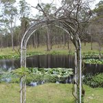 Beautiful  wedding arch by the pond